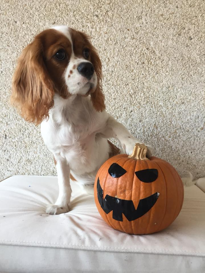 dog with paw on pumpkin