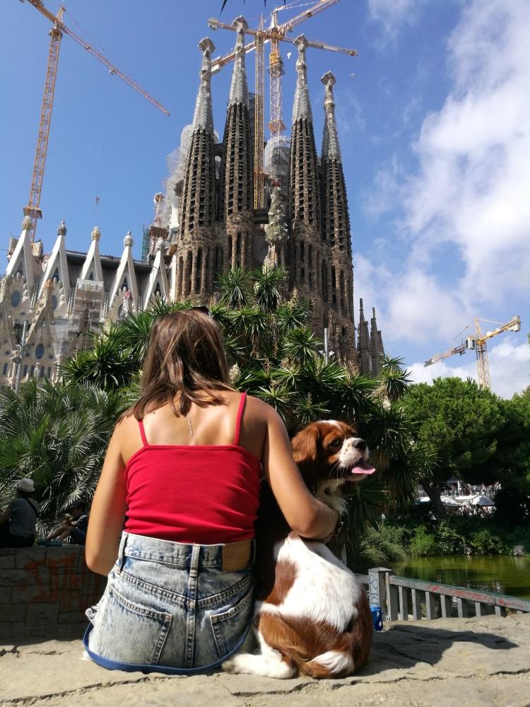 king can rio travel dog sagrada familia barcelona