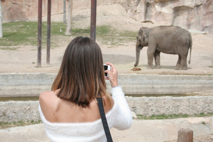 terra natura benidorm girl looking at elephant wearing white jumper from bershka