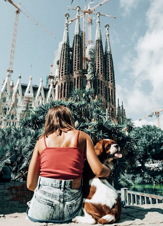 august 2018 1se my year in review cavalier king charles spaniel travelling to sagrada familia barcelona