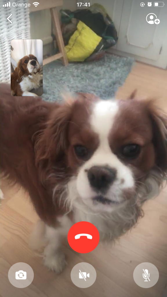 My two dogs FaceTiming each other