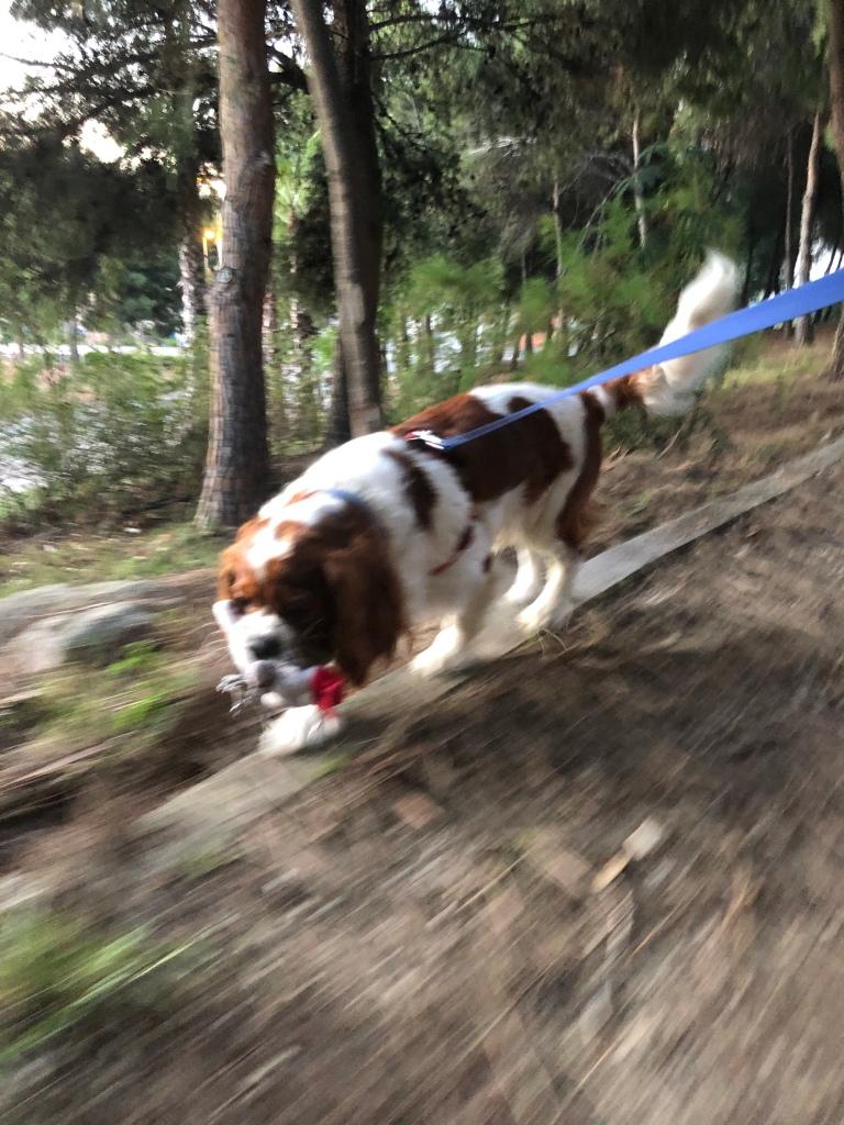Rio running in the forest Benidorm lockdown