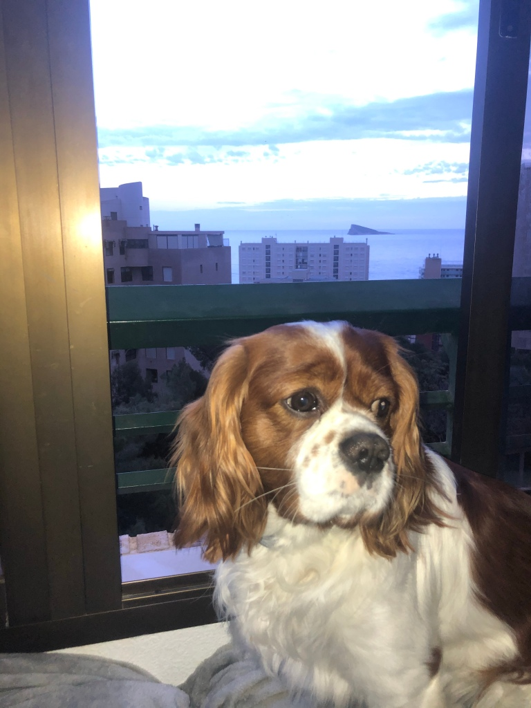 Rio watching the benidorm sunset