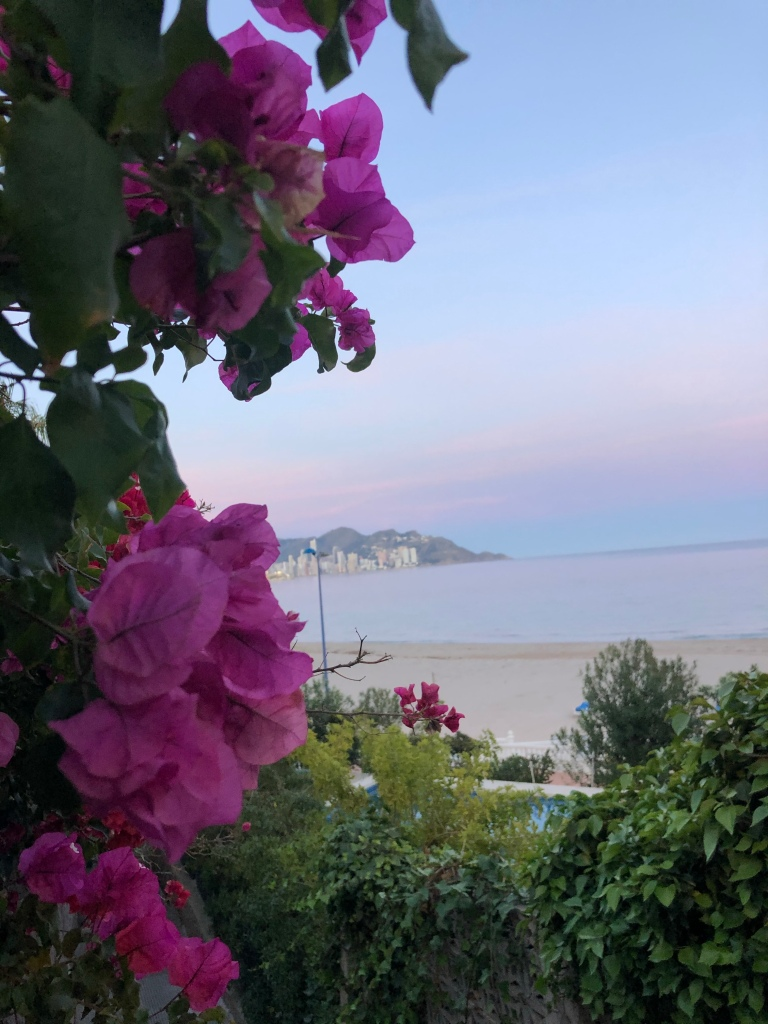 The beautiful pink flowers and sky over Poniente beach