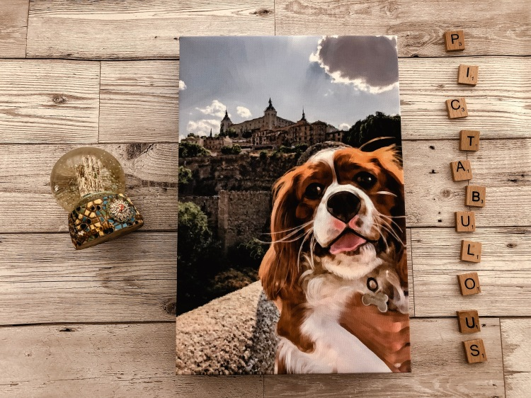 pictabulous photo canvas cavalier king charles review canvas print