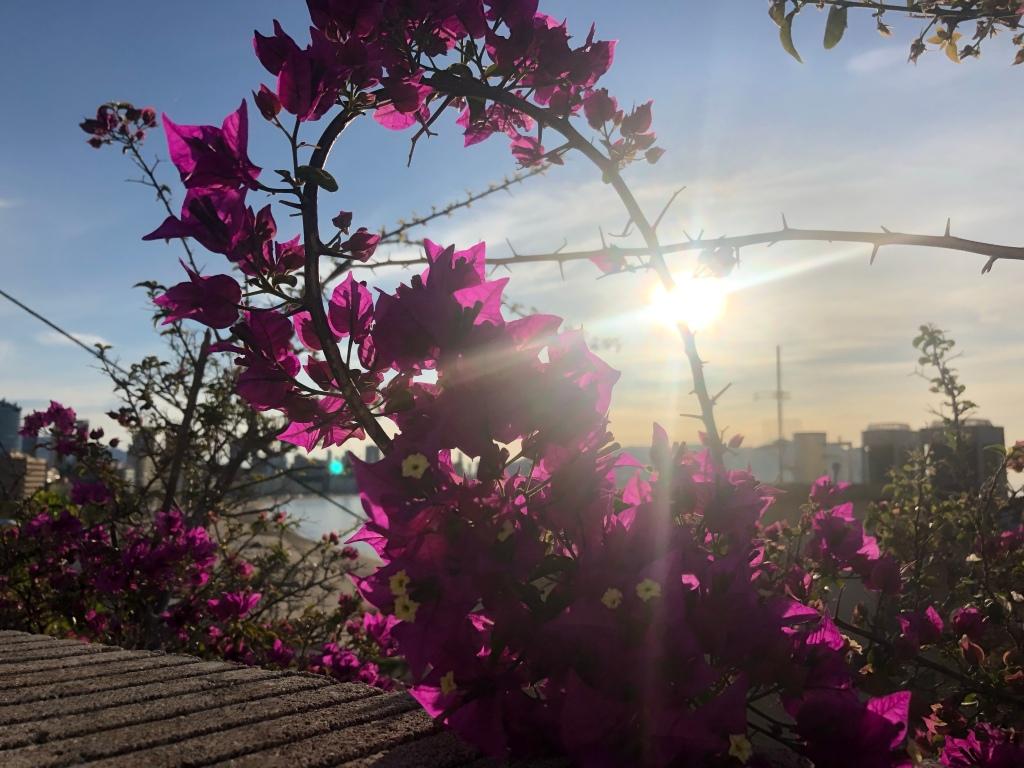 Flowers in Benidorm Spain lockdown