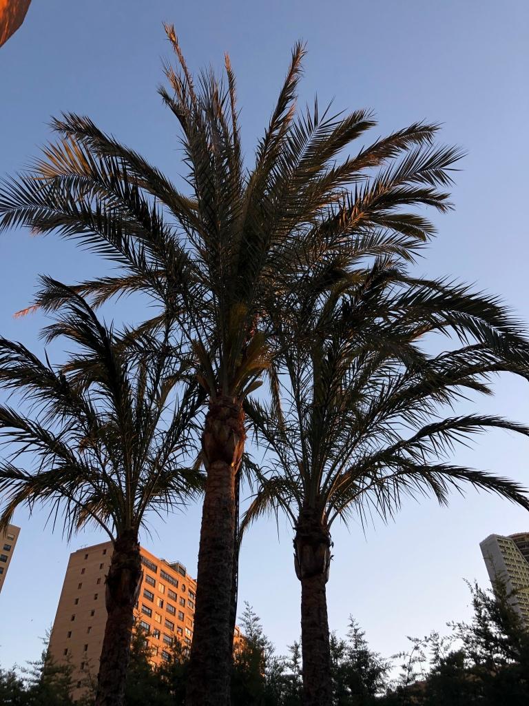 Palm trees Benidorm lockdown diary