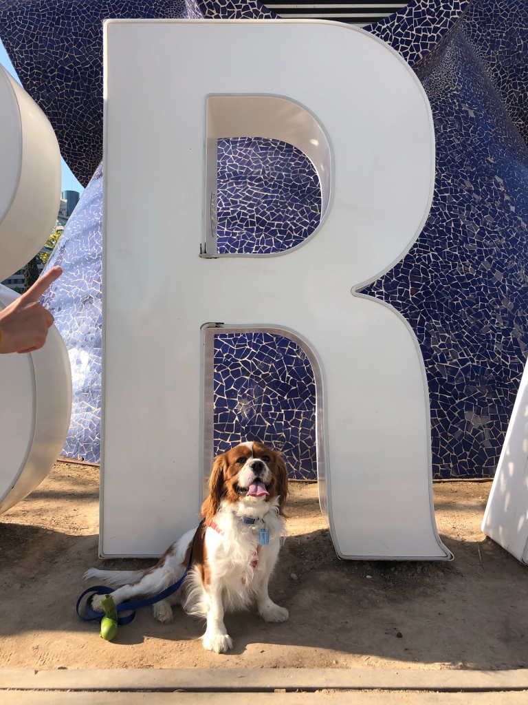 Rio happy with the letter r in Valencia cavalier King Charles