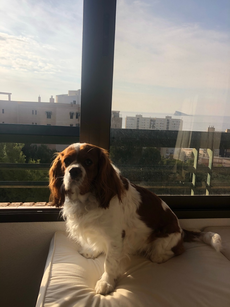 Rio sitting on balcony morning in Benidorm