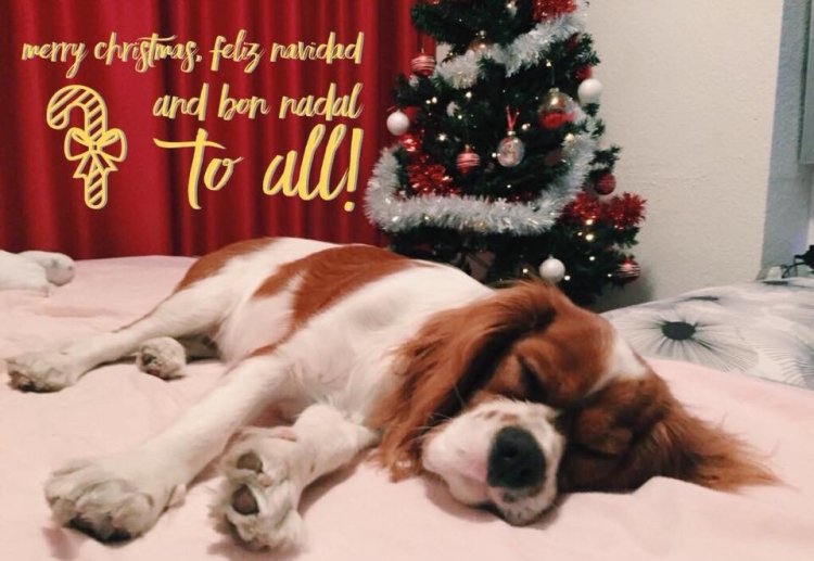 cavalier king charles asleep in front of christmas tree merry christmas writing feliz navidad and bon nadal