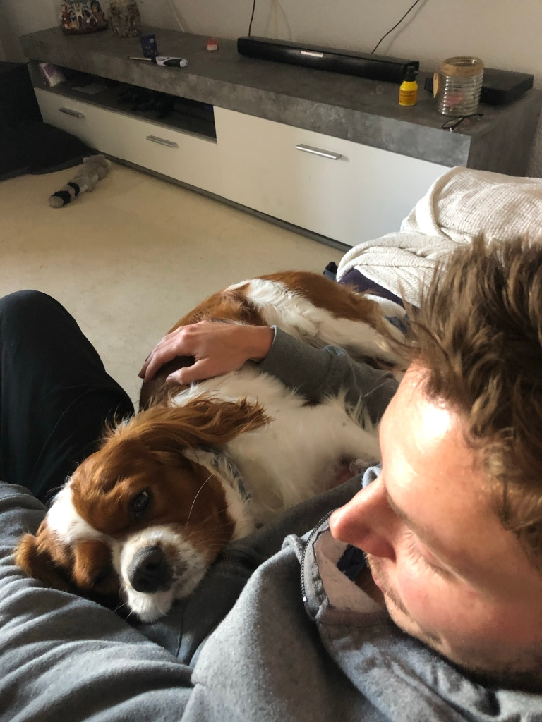 Rio and Alex cuddling on sofa cavalier King Charles spaniel