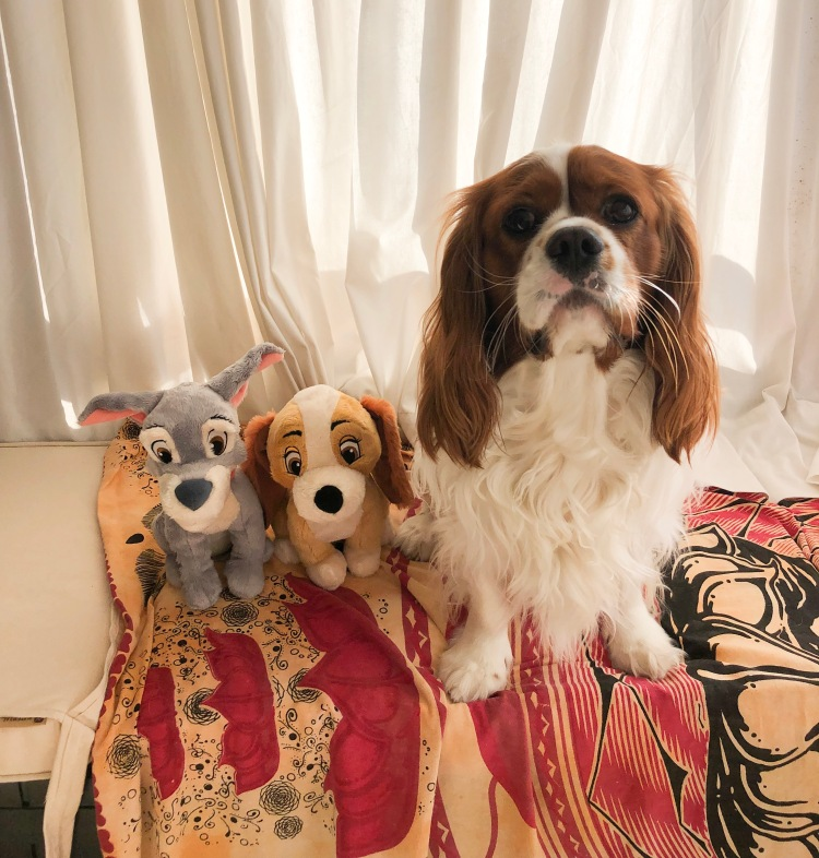 why cavaliers are the best breed