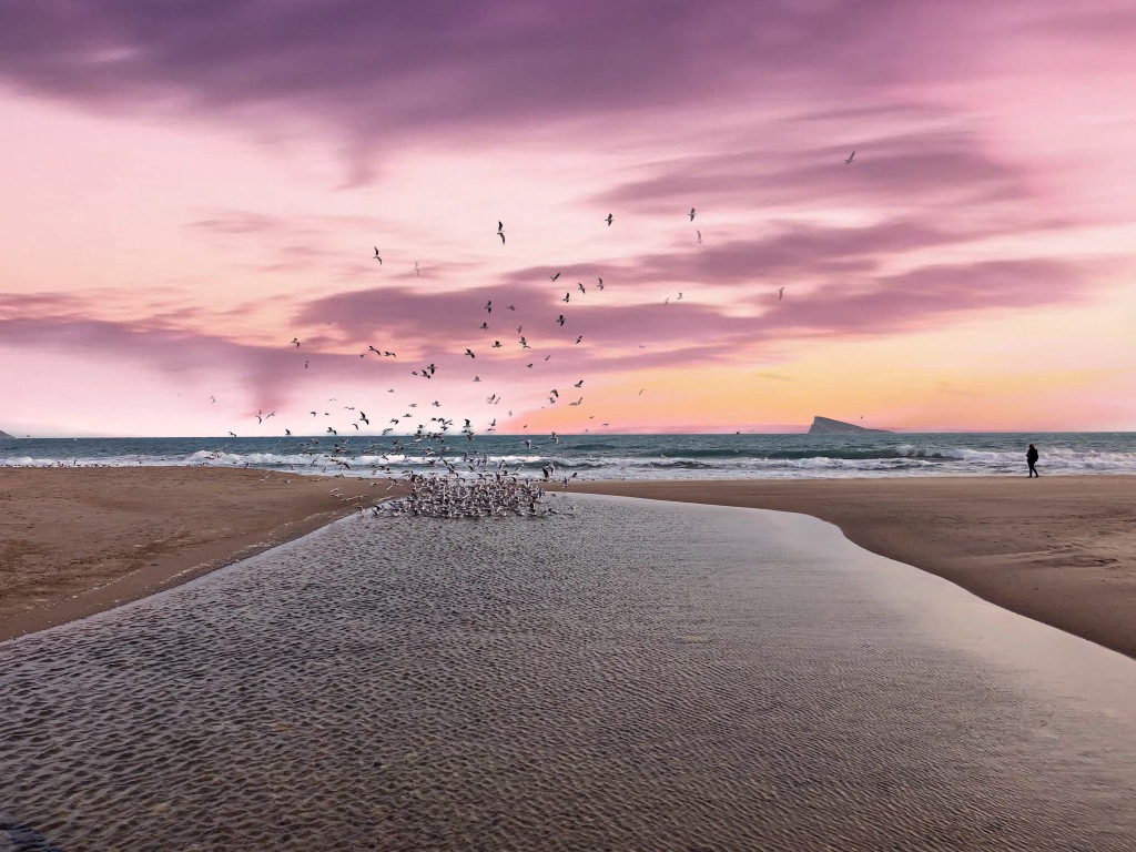 birds flying up from benidorm beach